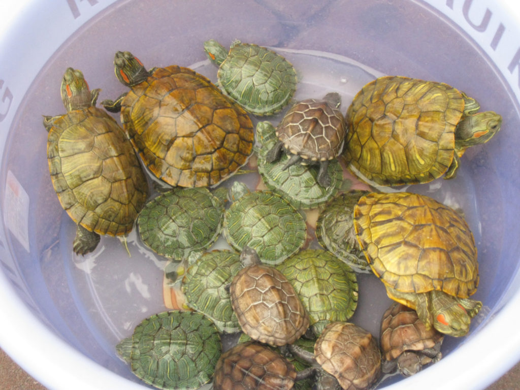 turtles for sale on the street